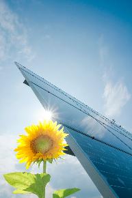 Etude d'impact et accompagnement pour les spécialistes des énergies renouvelables